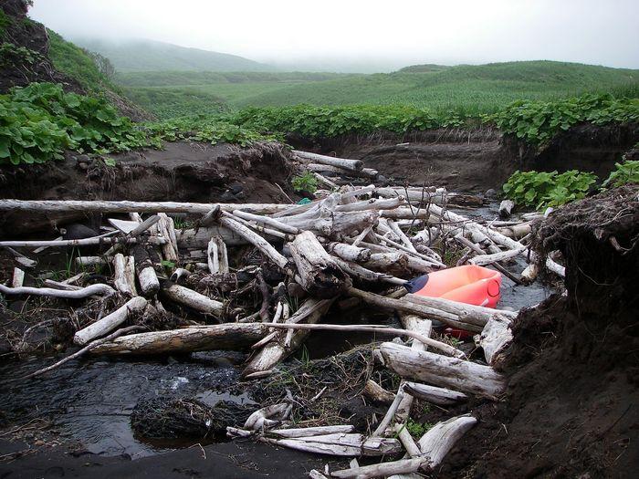 о. Симушир, бухта Душная. Завал бревен, образованный цунами.